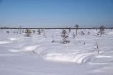 Незамерзающие линзы на болоте