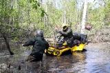 В затопленном лесу