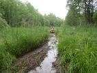 На таёжных болотах