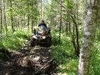 На лесной тропе