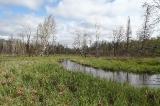 Река и болото